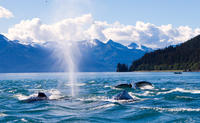 Juneau Whale-Watching Cruise