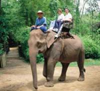 Nong Nooch Village Half-Day Tour from Pattaya