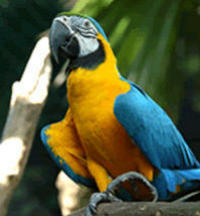 Private Tour: Singapore Jurong Bird Park Tour