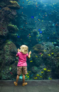 Sentosa S.E.A. Aquarium™ Admission in Singapore with Optional Hotel Transport