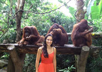 Singapore Zoo Morning Tour with optional Jungle Breakfast amongst Orangutans