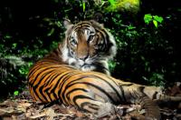 Singapore Zoo Night Safari Tour with optional Buffet Dinner