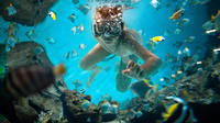 Snorkeling Tour: Coral Reefs and Underwater Museum