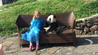 Private Day Trip including Panda Holding and Feeding at Dujiangyan Panda Center