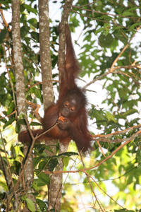 3-Day Tour from Sabah: Sandakan Sightseeing and Wildlife Experience in Sepilok and Selingan