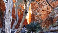 Angkerle Standley Chasm Tour from Alice Springs Including 4-Course Dinner image 1