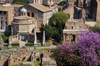 Rome Super Saver: Skip-the-Line Ancient Rome and Colosseum Walking Tour plu