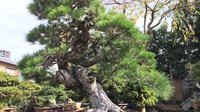 Harnessing Nature to Create Beauty and Health    A half day private car Tokyo tour of a bonsai studio  miso shop and feudal garden