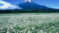 Private Chartered Taxi Tour to the Mt Fuji 5th Station from Yokohama