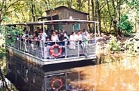 Swamp and Bayou Sightseeing Tour from New Orleans