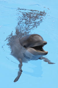 Dolphin Encounter at Ocean World