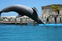 Picture of Dolphin, Shark and Stingray Encounter Combo in Puerto Plata