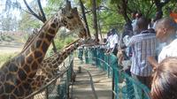 Half-Day Haller Park Tour from Mombasa