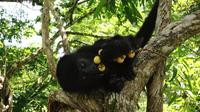 Howler Monkey Sanctuary from Belize City