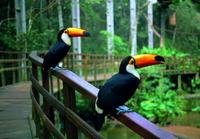 Parque das Aves Admission Ticket in Foz do Iguassu image 1