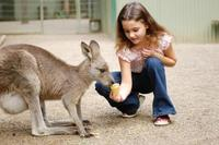 3-Day Blue Mountains and Hunter Valley Small-Group Eco-Tour, Sydney City Tours and Sightseeing