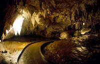 Auckland to Rotorua via Waitomo Glowworm Caves One-Way Tour, Auckland CBD Tours and Sightseeing