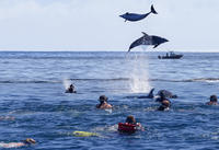 Bay of Islands Dolphin Cruise from Paihia or Russell, Paihia Water Activities
