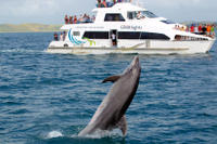 Best of the Bay Supercruise: Original Cream Trip, Paihia Tours and Sightseeing