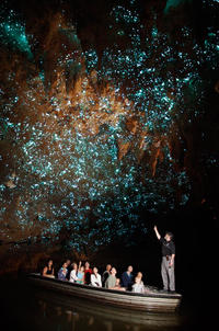 Waitomo Glowworm Caves Discovery Tour from Auckland