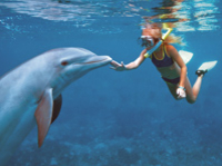 'Cancun Dolphin Swim Adventure' - Schwimmabenteuer mit Delfinen in Cancun
