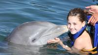 Dolphin Encounter in Los Cabos