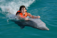 Picture of Grand Cayman Dolphin Swim Adventure