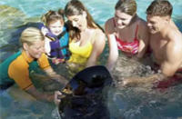 Best Riviera Maya Small-Group Wildlife Adventure: Manatees and Dolphins