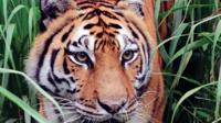 Big Cat Rescue for Kids Tour in Tampa