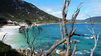 Wilsons Promontory Hiking Tour from Melbourne