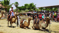 Larnaca Market and Camel Park Excursion from Ayia Napa