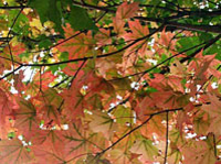 Picture of Fall Foliage Spectacular Tour from Boston