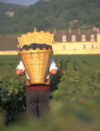 Wine Tasting - Cote de Nuits Region with Two Cellar Visits