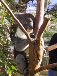 Bonorong Wildlife Park , Derwent River Cruise and Cadbury Chocolate Factory Tour from Hobart