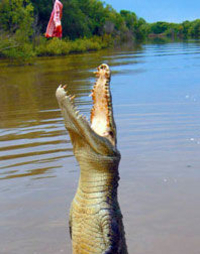 Darwin Jumping Crocodiles Cruise on Adelaide River
