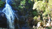Bushwalkers' Adventure Noosa Hinterland Full-Day