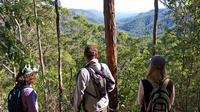 Bushwalkers' Adventure Noosa Hinterland Half-Day Tour