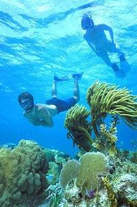 Belize Hol Chan Marine Reserve and Shark Ray Alley Snorkel Tour from Ambergris Caye