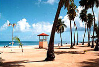 http://cache.graphicslib.viator.com/graphicslib/4170/SITours/el-yunque-rainforest-and-luquillo-beach-from-san-juan-in-san-juan-1.jpg