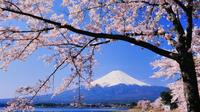Cherry Blossom Tour with Visit to Odawara Castle, Lake Kawaguchi, and Pirate Ship Ride including Lun