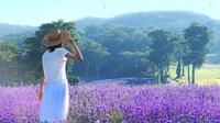 Surrounded by Lavender Aroma in Tambara Lavender Park and Enjoy Peach Picking