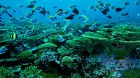 Maldives Sun and Snorkel Including Transportation by Speed Boat and Traditonal Maldivian Afternoon T