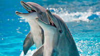 2-Hour Private Dolphin Cruises in Orange Beach