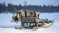 Sami Culture Tour Including Reindeer Sleigh Ride and Lasso Throwing in Tromso image 1