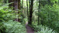 Guided Hike in Portland's Forest Park