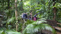 Full Day Cape Tribulation and Daintree Rainforest Tour