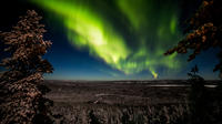Discover Northern Lights: Photography Tour from Rovaniemi