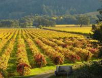 Calistoga Wine Tasting Bike Tour
