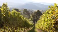 Pizzini Wines Old World Flavours New Vintage Wine Tasting and Picnic image 1