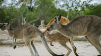 Australia Walkabout Wildlife Park General Admission: Family 1 Adult plus Children